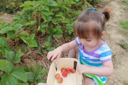 strawberrypick 008