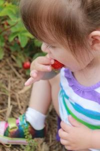 strawberrypick 010