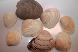 shellfun 015