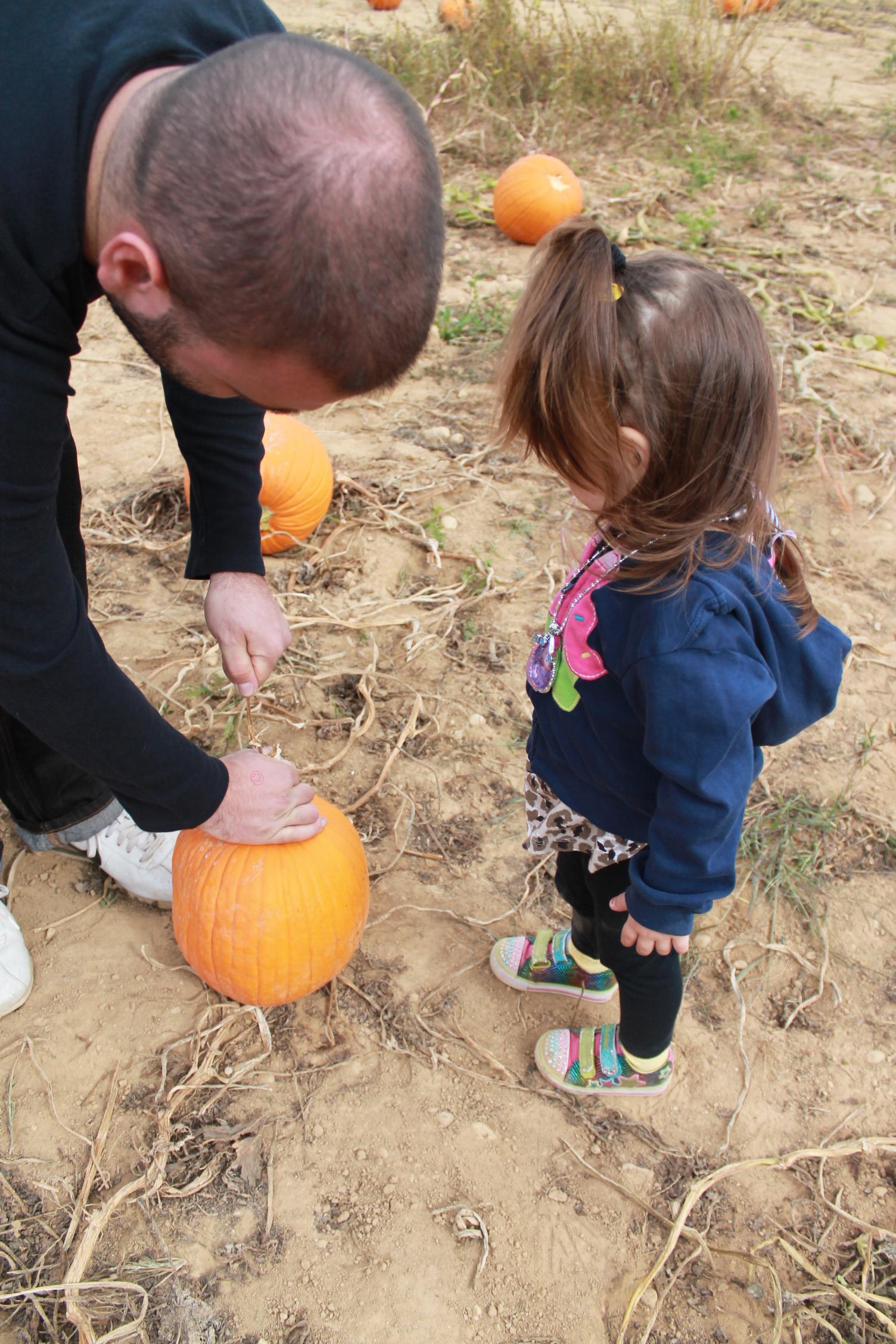 Pumpkin Picking On Long Island 2016