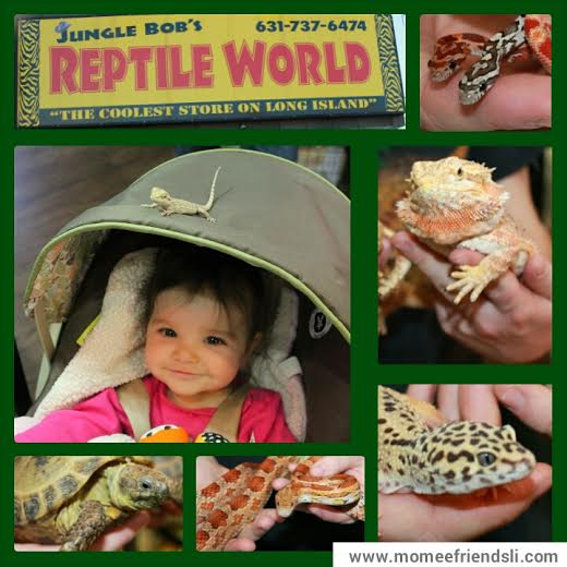 Reptiles Crafts Pinterest See More Great Reptile Crafts