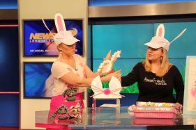 bunnies8