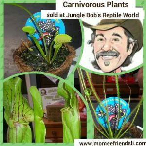 carnplant photo grid