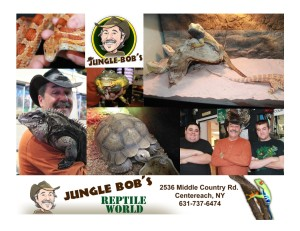junglebob collage