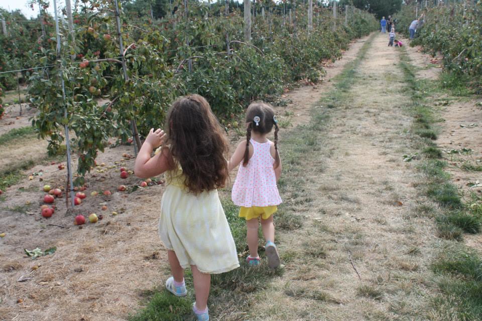 Pumpkin Picking Nassau County Long Island