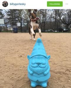 blue gnome puppy