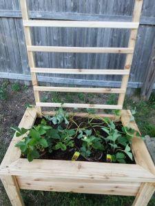 planter box 4