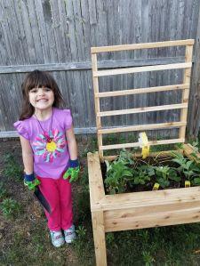 planter box 5