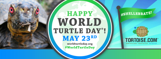 world turtle day 1.png