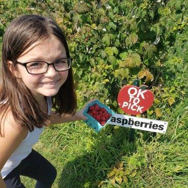 raspberry 1