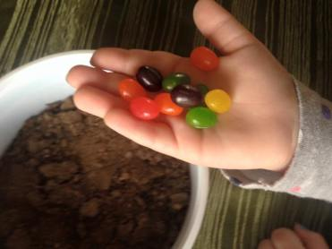 magical jelly beans 1